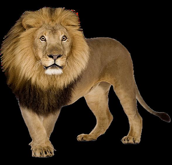 Lion PNG - 26936