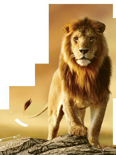 Lion Png image #42299 - Lion PNG