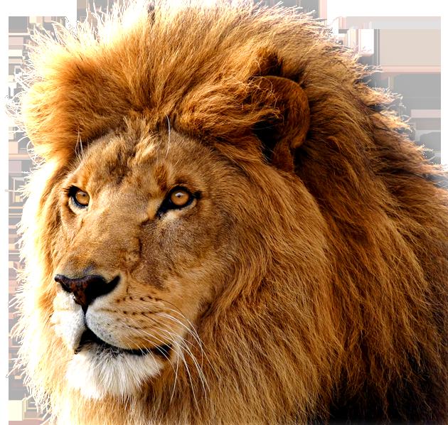 Lion PNG - 26938