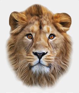 Vector Lion head, Vector, Lion, Head PNG and Vector - Lions Head HD PNG