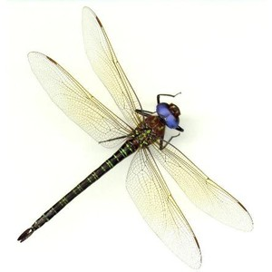 Dragonfly PNG - 1747