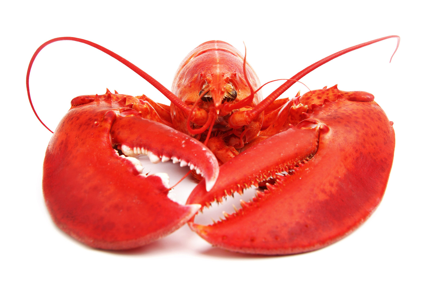 19b00f4.png - Lobster HD PNG