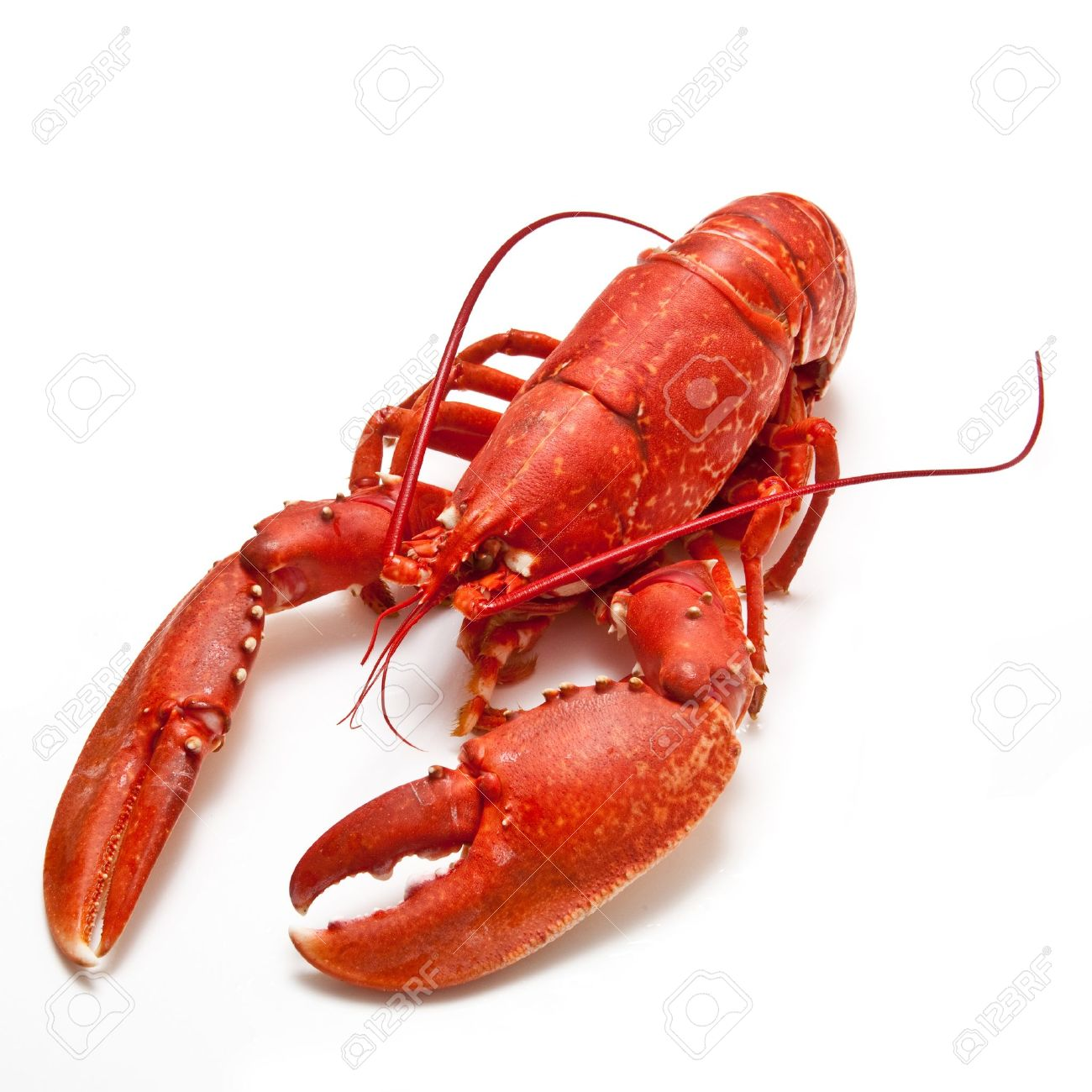 56398ea.png - Lobster HD PNG