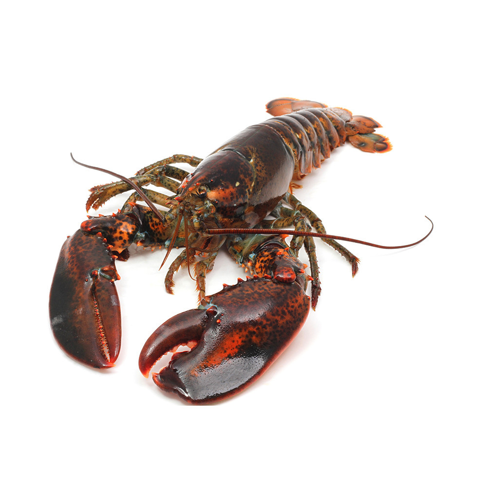 9c4cff1.png - Lobster HD PNG