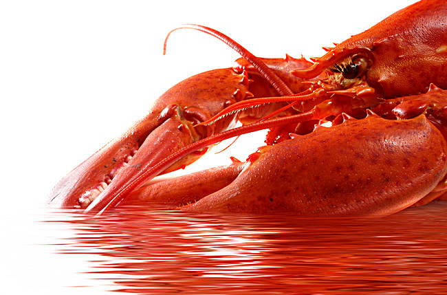 bright red lobster,hd - Lobster HD PNG
