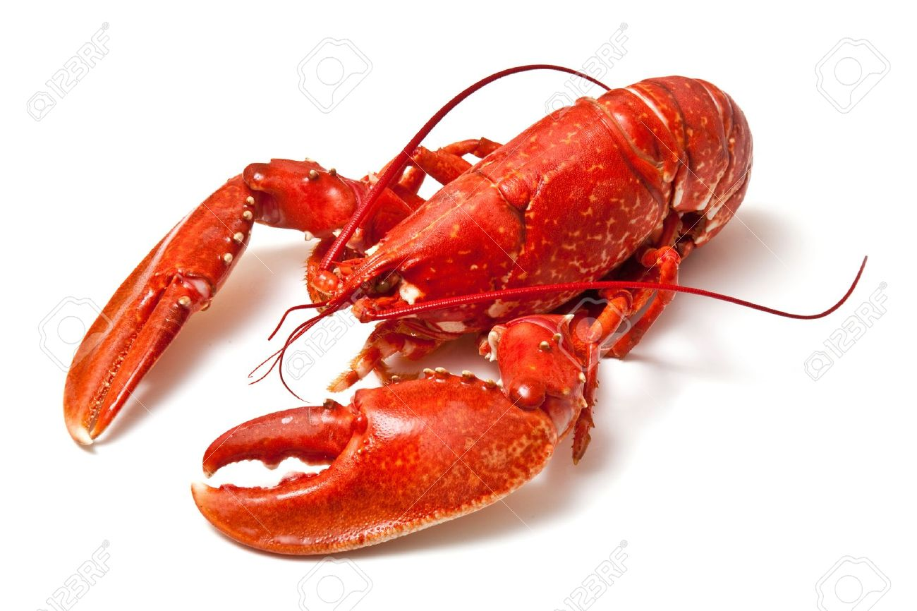 d69e789.png - Lobster HD PNG
