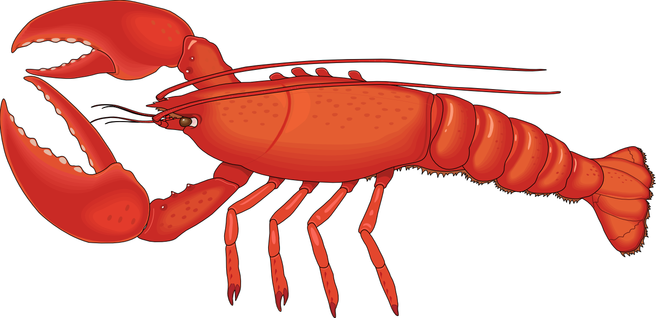 Download - Lobster HD PNG