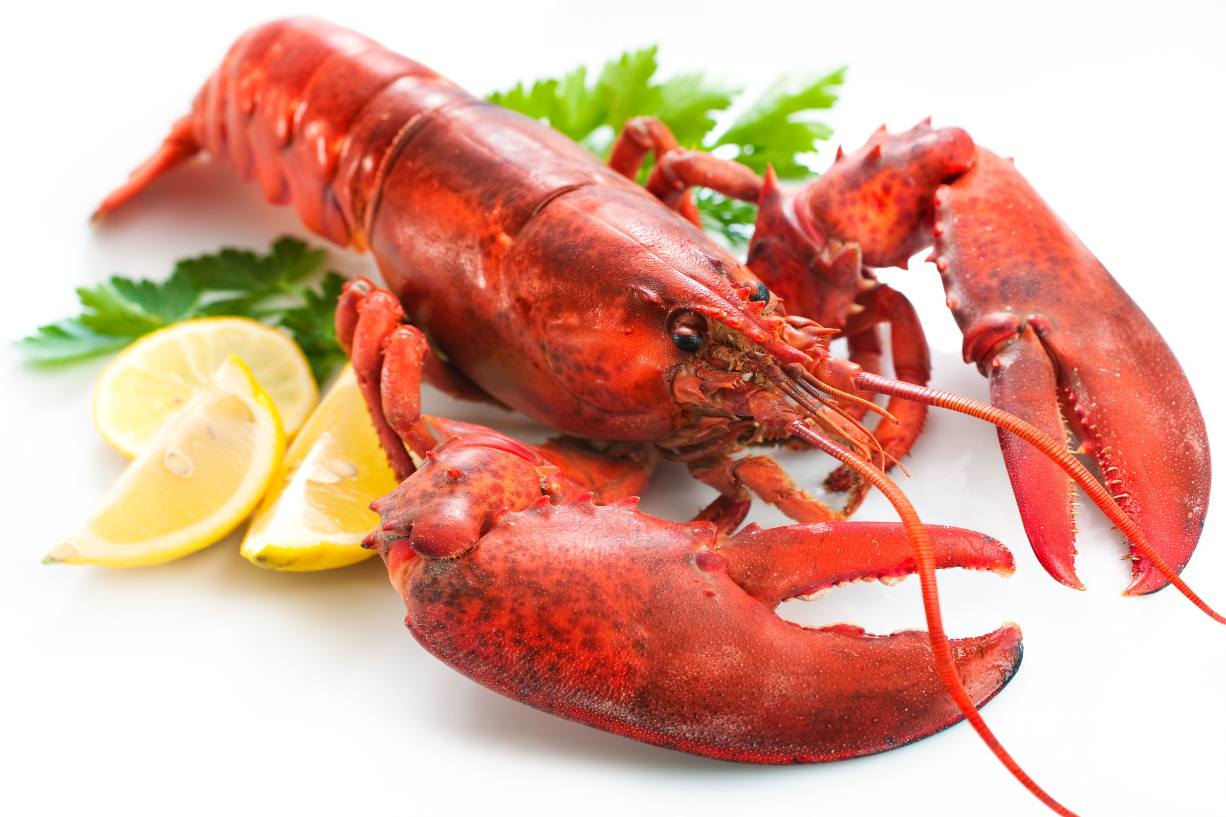 Lobster from West Coast Fish - Lobster HD PNG