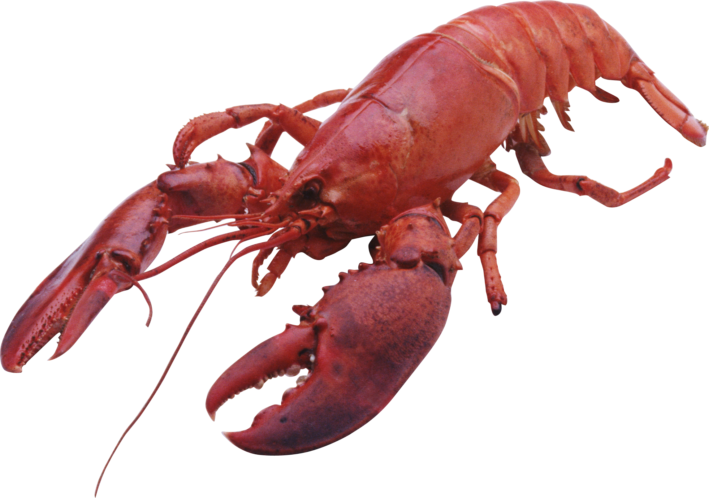 Lobster PNG - Lobster HD PNG