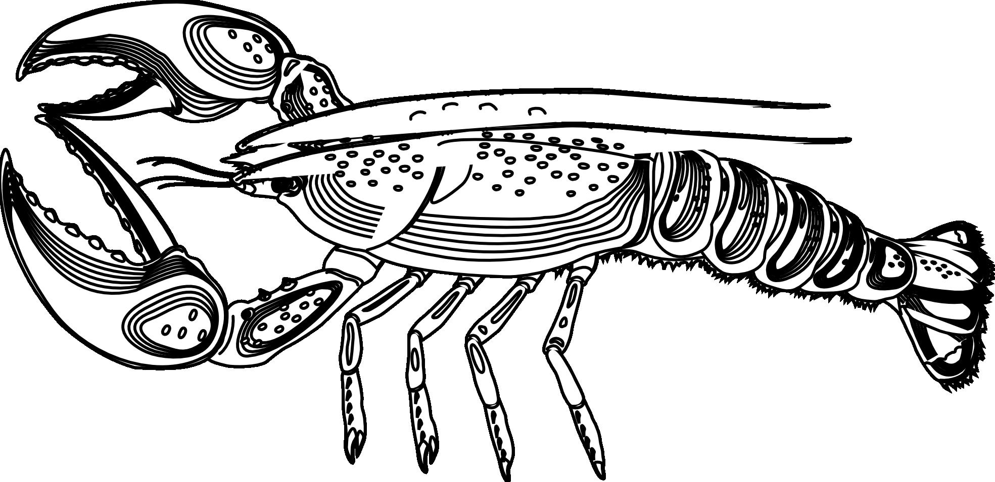 . PlusPng.com Artfavor Lobster Black Coloring Book 1969px.png 410(K) - Lobster PNG Black And White