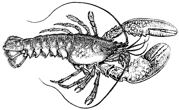 Lobster PNG Black And White