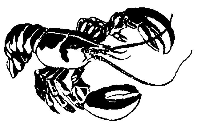 Lobster Clip Art - Lobster PNG Black And White
