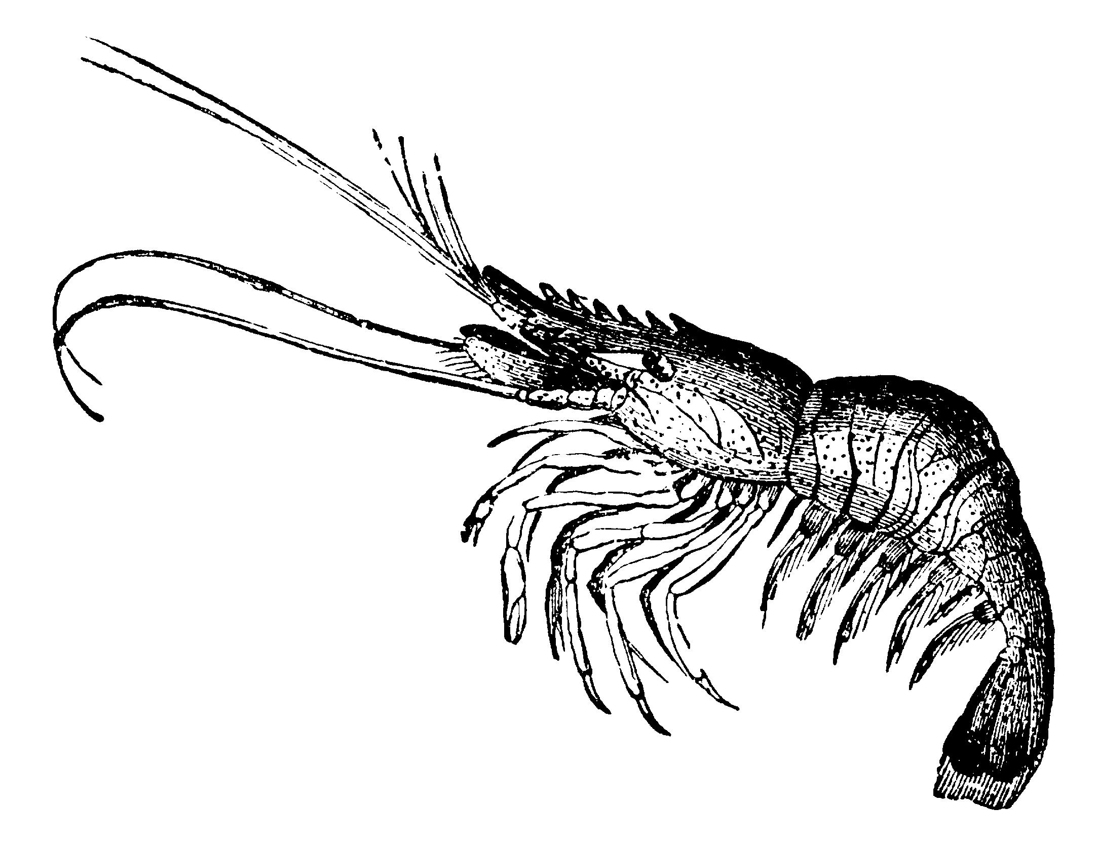 More Resources About Marine Arthropods