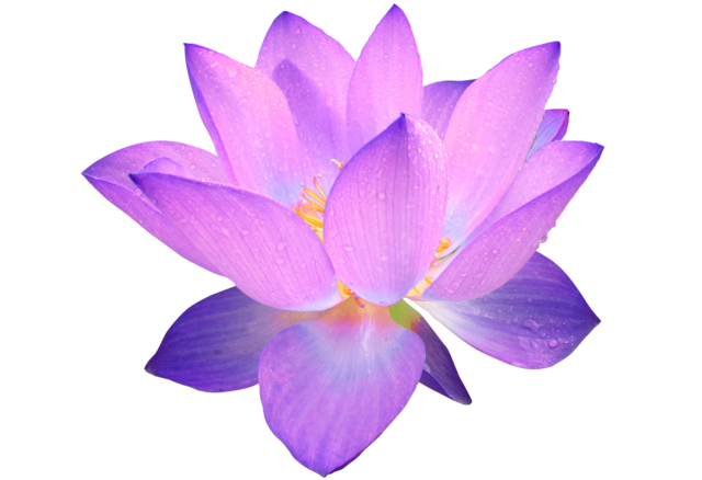 Lotus, Lotus, Flowers, Flower