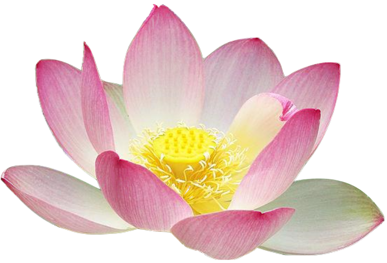 Free to Use u0026 Public Domain Lotus Flower Clip PlusPng.com  - Lotus Flower PNG HD