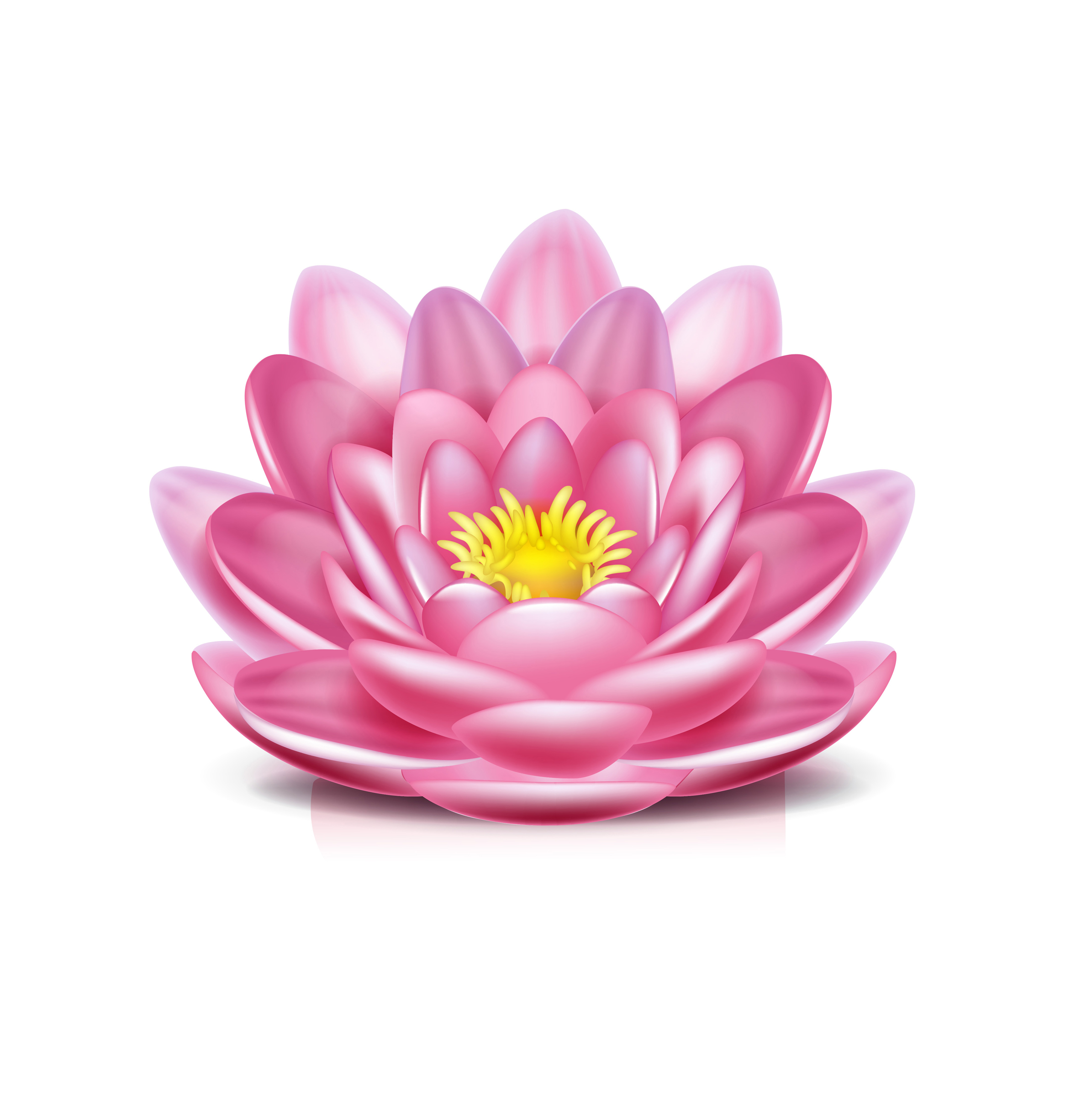 Lotus Flower Png Hd Transparent Lotus Flower Hdpng Images Pluspng