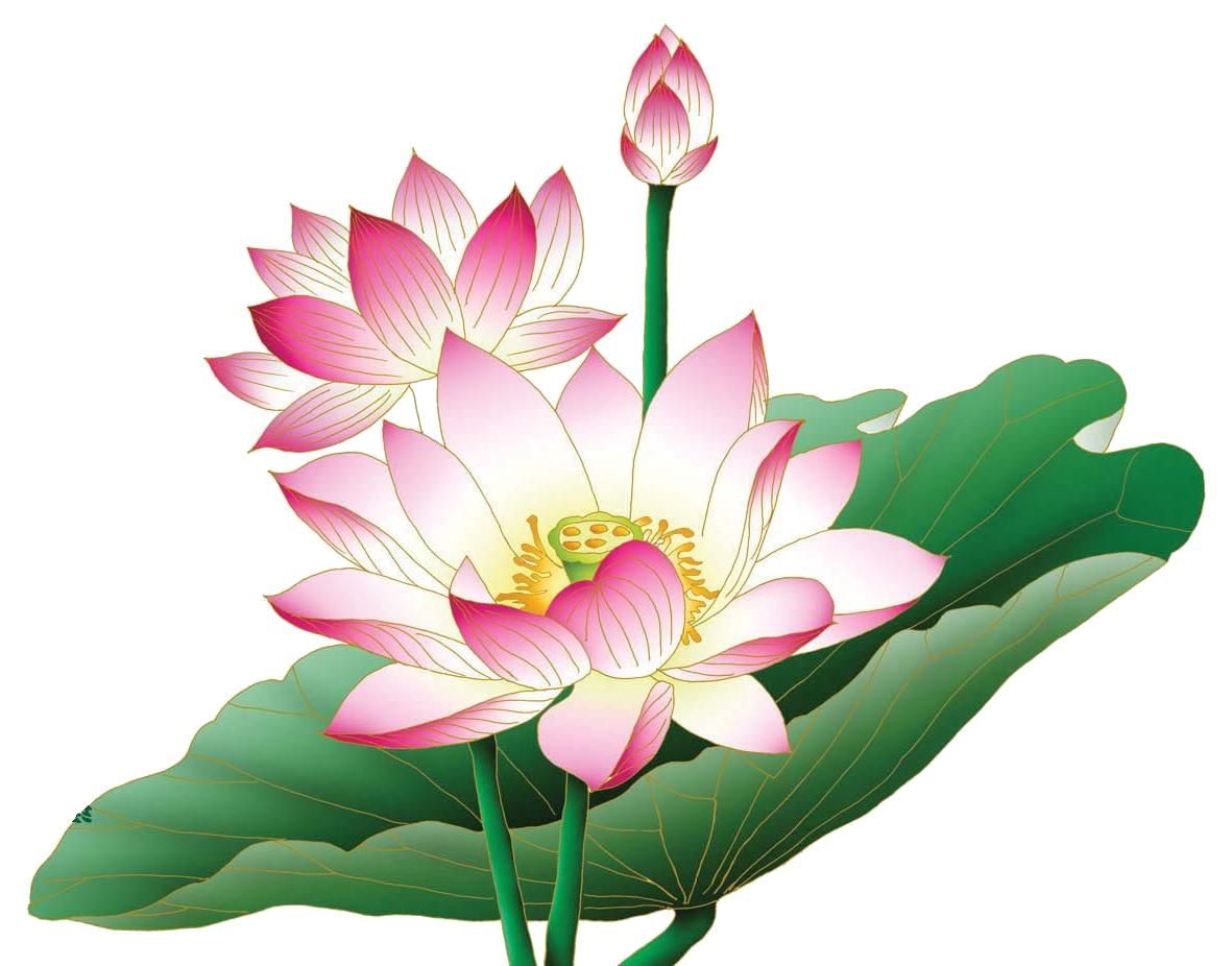 lotus png - Google Search - PNG Lotus Flower - Lotus Flower PNG HD