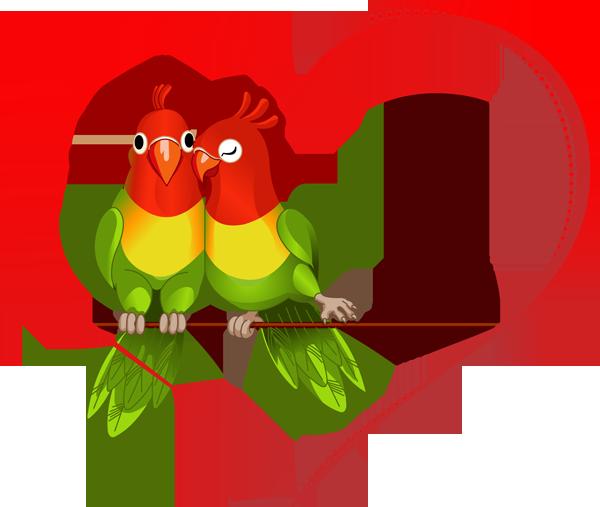 Love Birds PNG - 8433