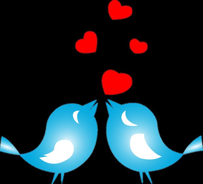 Love Birds PNG - 8438