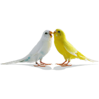 Similar Love Birds PNG Image - Love Birds PNG