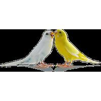 Love Birds PNG - 8439