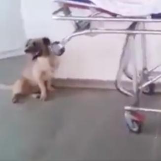Loyal Dog PNG-PlusPNG.com-327 - Loyal Dog PNG