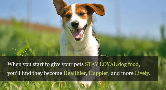 Loyal Dog PNG-PlusPNG.com-558 - Loyal Dog PNG