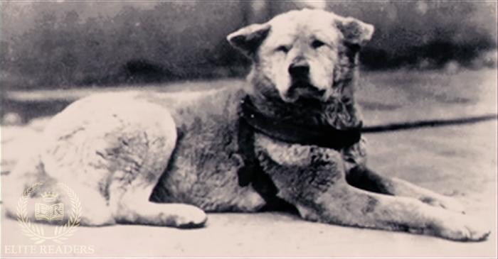 hachiko-loyal-dog-3 - Loyal Dog PNG