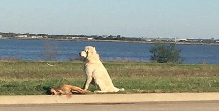 Incredibly Loyal Dog Stays Beside His Friend Who Was Run Over By A Car - Loyal Dog PNG