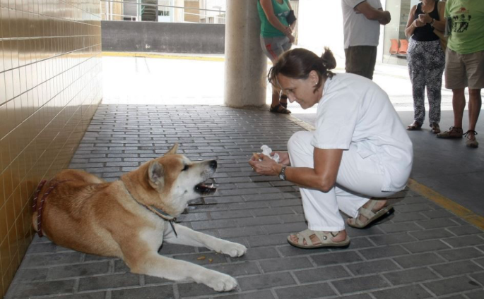 Loyal Dog Patiently Waits Outside Hospital For Sick Owner - Loyal Dog PNG