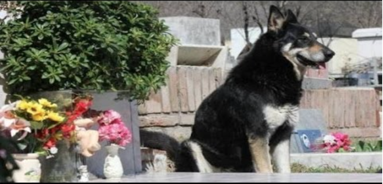 Loyal Dog Still Visits His Owneru0027s Grave, Six Years After He Passed Away 1k - Loyal Dog PNG