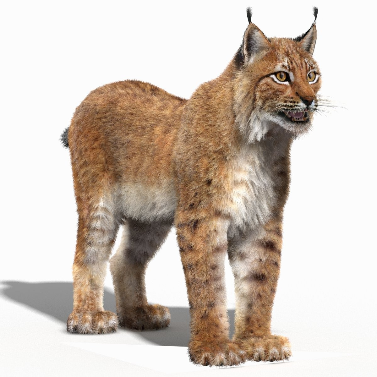 eurasian lynx fur 3d model - Lynx HD PNG