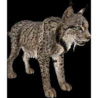 File:Spanish Lynx (Aurora Designs) 1.png - Lynx HD PNG