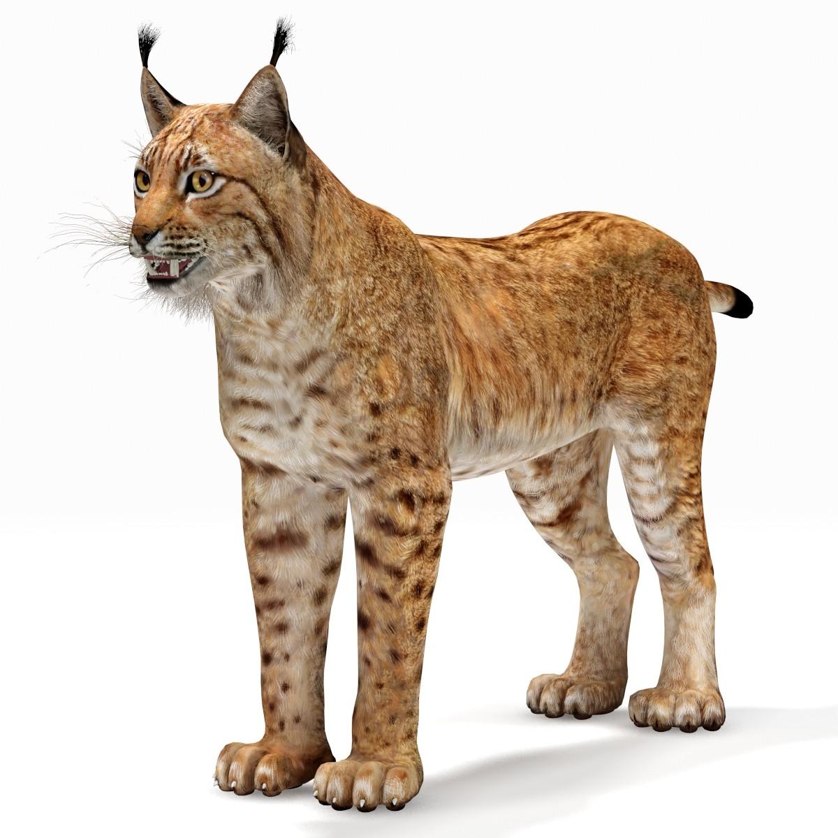 max lynx eurasian - Lynx PNG