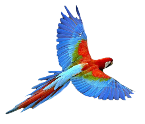 . PlusPng.com macaw-flying.pn