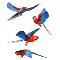 Macaw Png Hd PNG Image