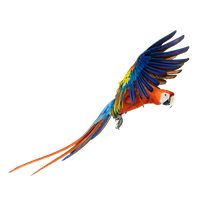 Macaw PNG Transparent Image