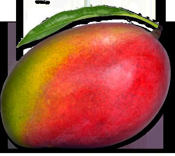 Mango HD PNG - 118572