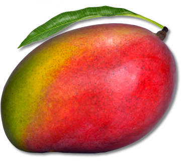Mango PNG - 14056