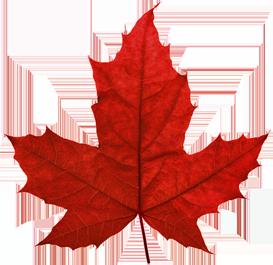 Maple Leaf PNG - 9265
