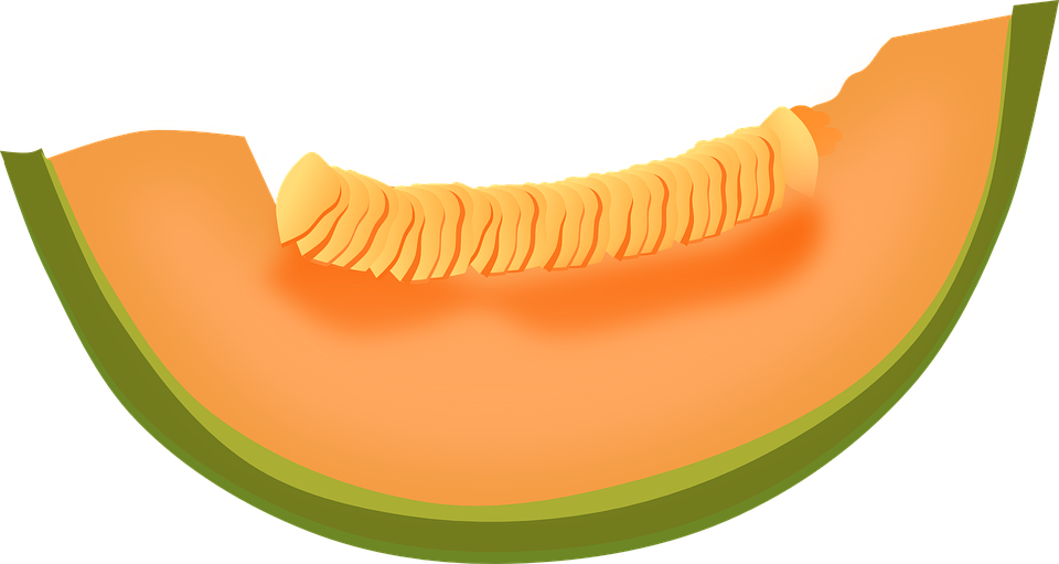 Cantaloupe, Melon, Fruit, Food, Fresh, Healthy, Sweet - Melon HD PNG