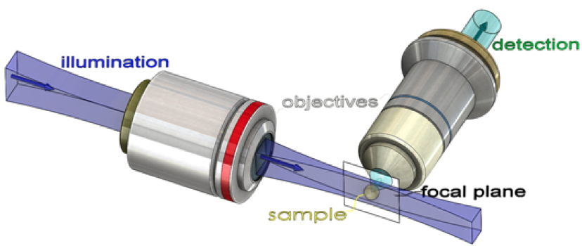 File:Structure de MFL.png - Mfl PNG