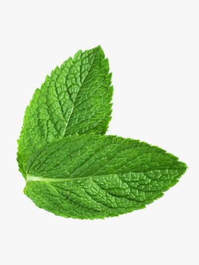 Green fresh mint leaves, Mint Leaf, Green, Leaf PNG Image - Mint HD PNG