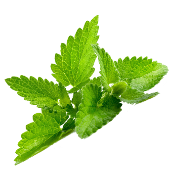 Pepermint PNG - Mint PNG - Mint HD PNG