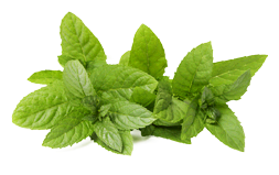 Pepermint PNG - Mint PNG