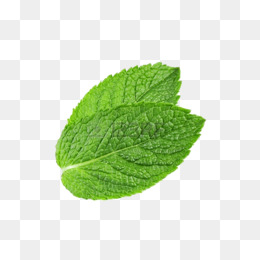 Two Mint Leaves - Mint PNG