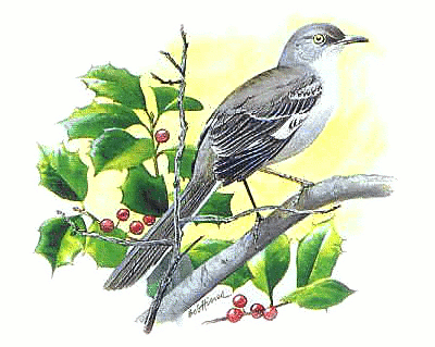 Mockingbird Bird