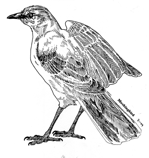 Mockingbird by ObloquyCondemed Mockingbird by ObloquyCondemed - Mockingbird PNG HD