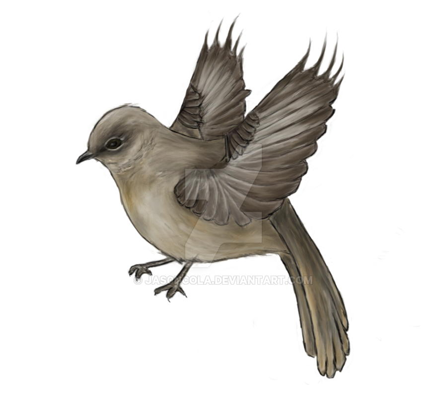 Mockingbird Doodle by Jas0nCola PlusPng.com  - Mockingbird PNG HD