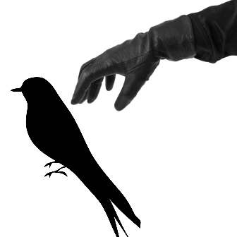 To steal a mockingbird - Mockingbird PNG HD